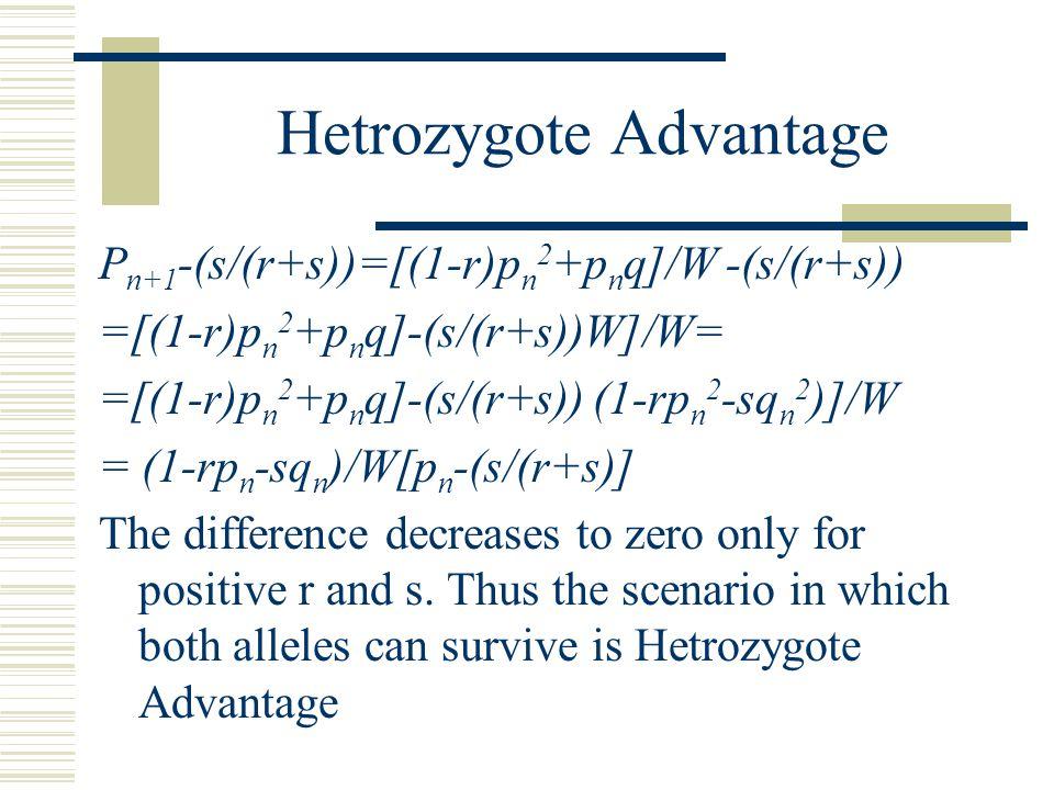Hetrozygote Advantage P n+1 -(s/(r+s))=[(1-r)p n 2 +p n q]/W -(s/(r+s)) =[(1-r)p n 2 +p n q]-(s/(r+s))W]/W= =[(1-r)p n 2 +p n q]-(s/(r+s)) (1-rp n 2 -