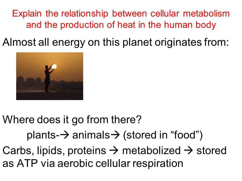 Explain the relationship between cellular metabolism and the production of heat in the human body Almost all energy on this planet originates from: Where does it go from there.