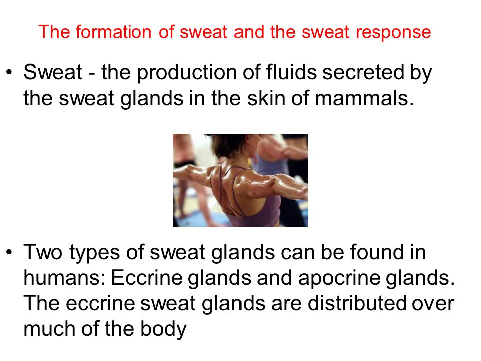 The formation of sweat and the sweat response Sweat - the production of fluids secreted by the sweat glands in the skin of mammals.