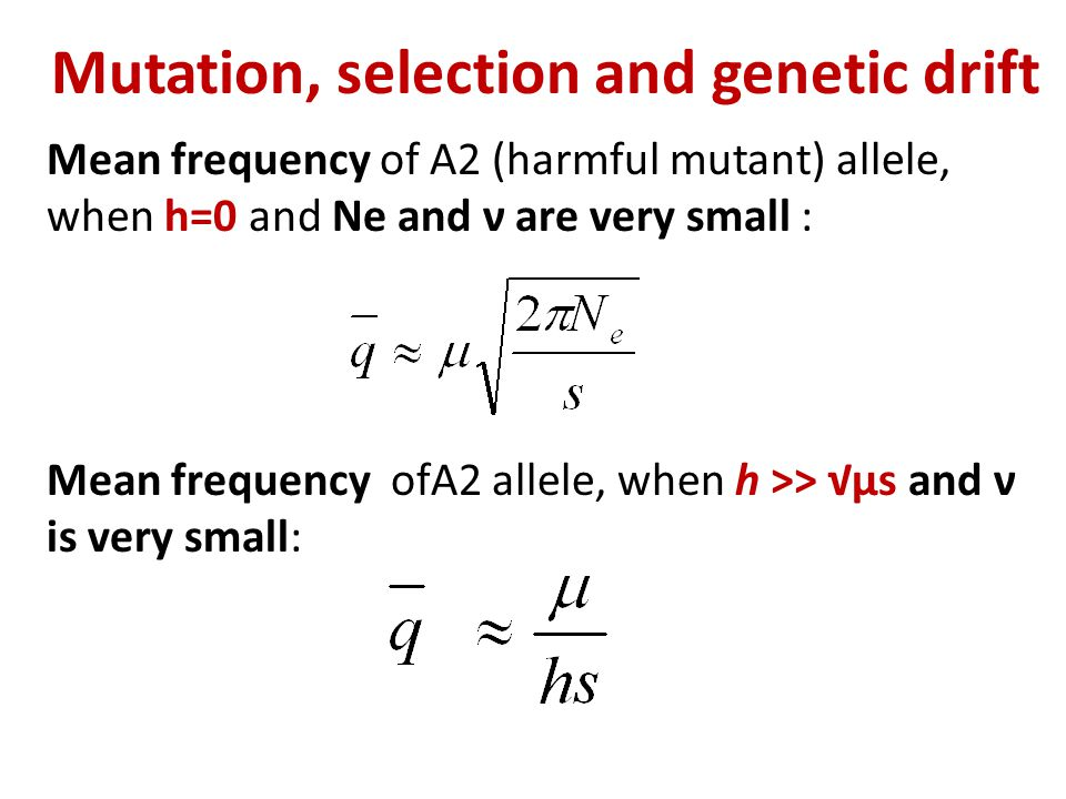 Mutation, selection and genetic drift Mean frequency of A2 (harmful mutant) allele, when h=0 and Ne and ν are very small : Mean frequency ofA2 allele,