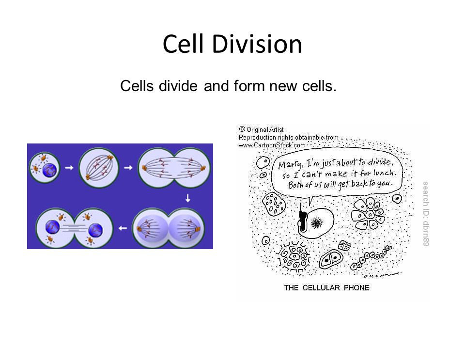 Chromosomes Structures in the nucleus of a cell that control the cell's activities.