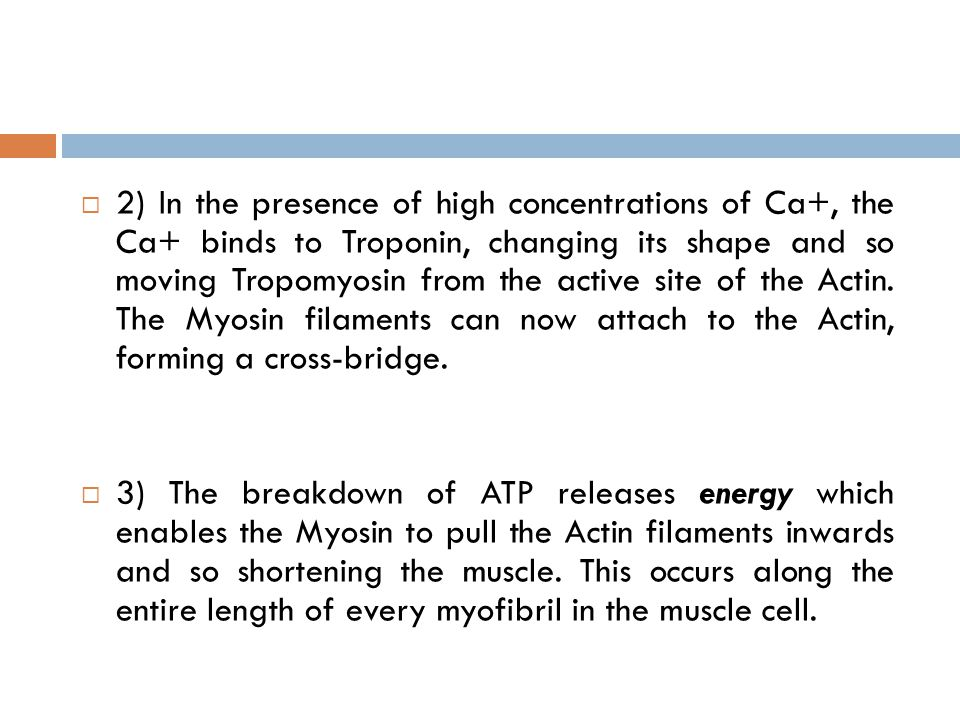  2) In the presence of high concentrations of Ca+, the Ca+ binds to Troponin, changing its shape and so moving Tropomyosin from the active site of th