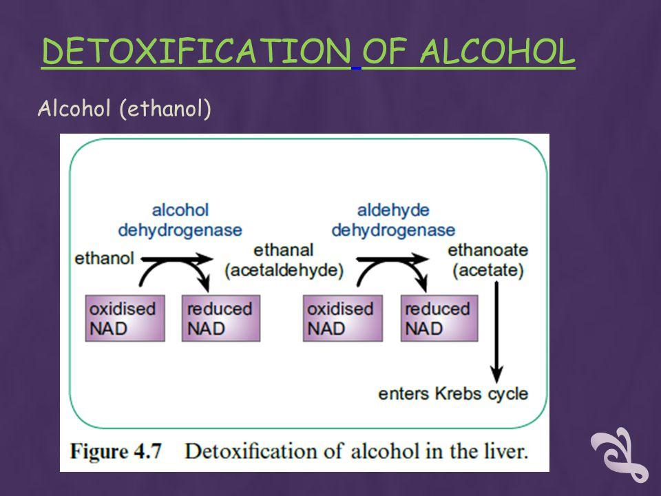 DETOXIFICATION OF ALCOHOL Alcohol (ethanol)