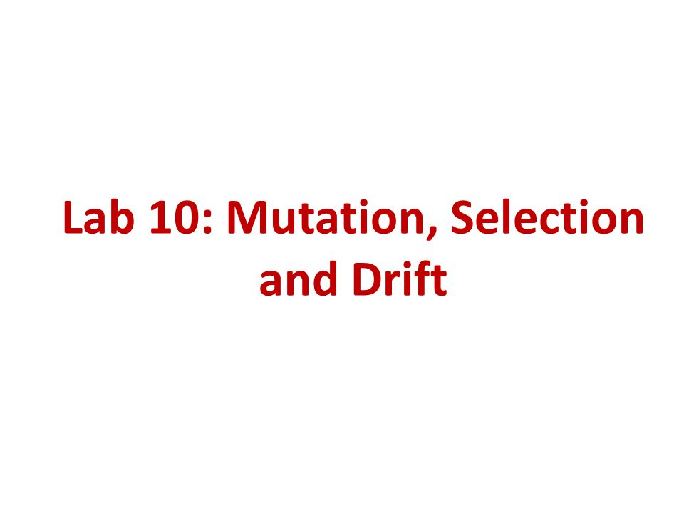 Lab 10: Mutation, Selection and Drift