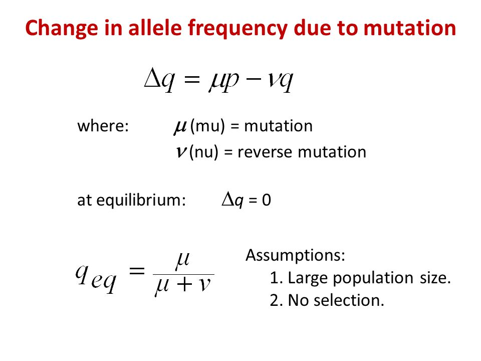 Change in allele frequency due to mutation where:  (mu) = mutation (nu) = reverse mutation at equilibrium:  q = 0 Assumptions: 1.Large population size.