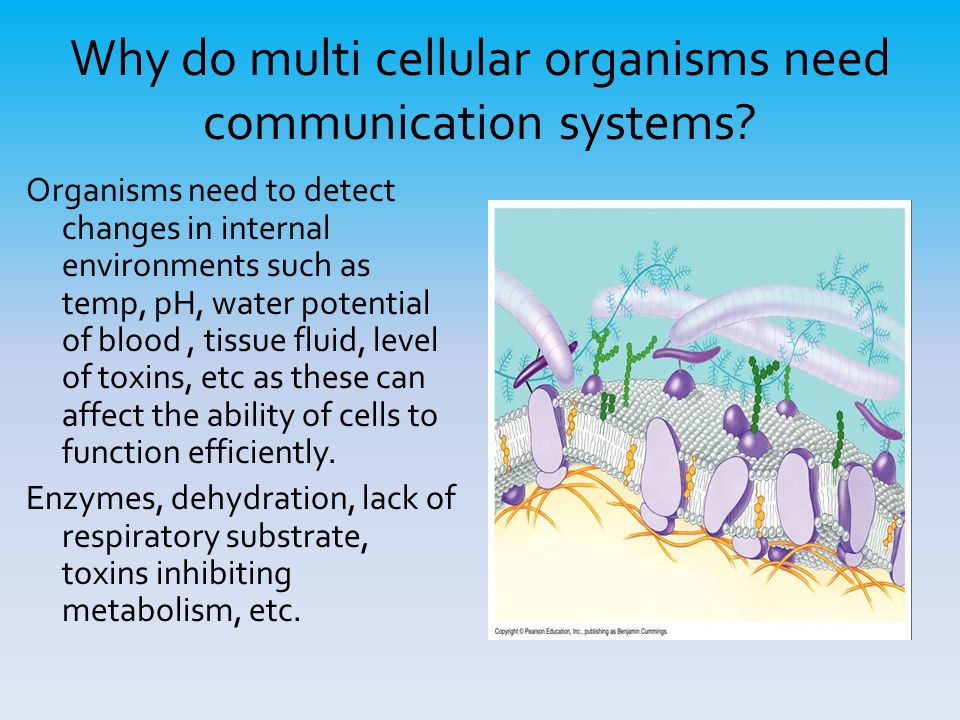 Why do multi cellular organisms need communication systems.