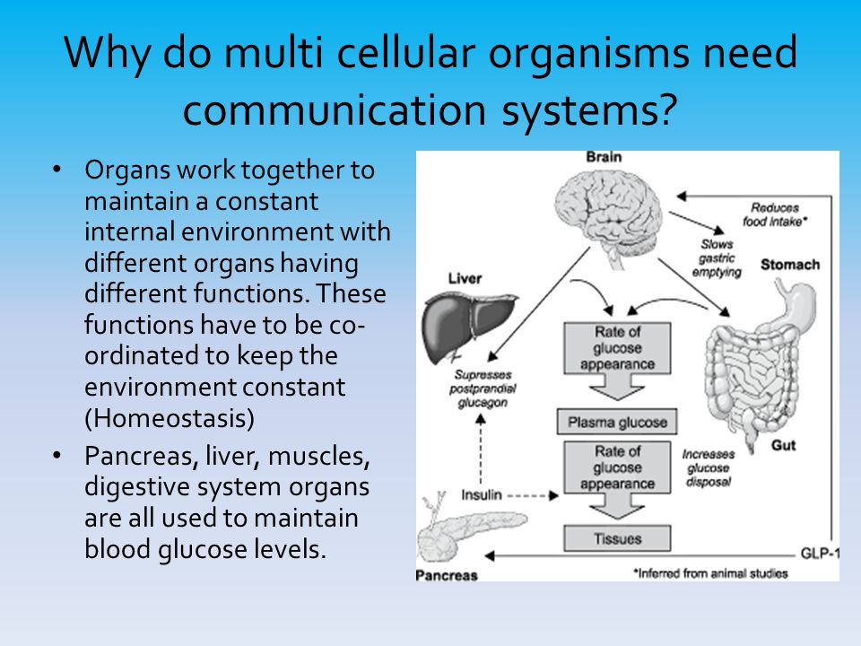 Why do multi cellular organisms need communication systems? Organs work together to maintain a constant internal environment with different organs hav