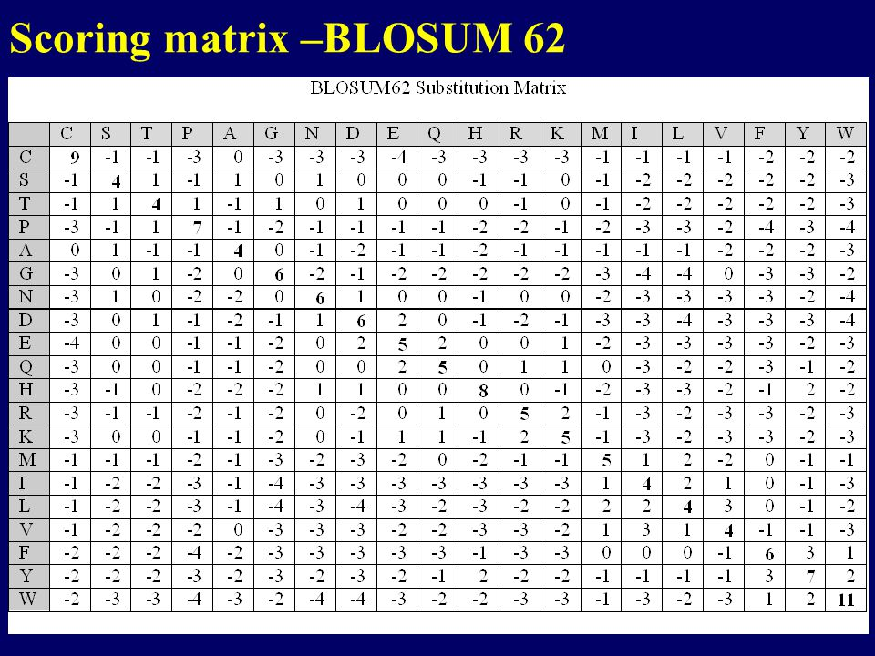 Scoring matrix –BLOSUM 62
