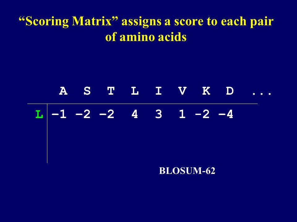Scoring matrix –BLOSUM 62