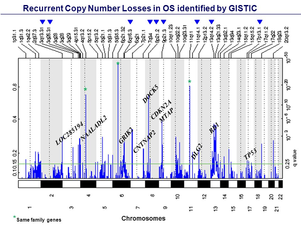 Recurrent Copy Number Losses in OS identified by GISTIC LOC285194 CNTNAP2 CDKN2A MTAP DLG2 RB1 TP53 GRIK2 * * * DOCK5 * Same family genes q value NAALADL2