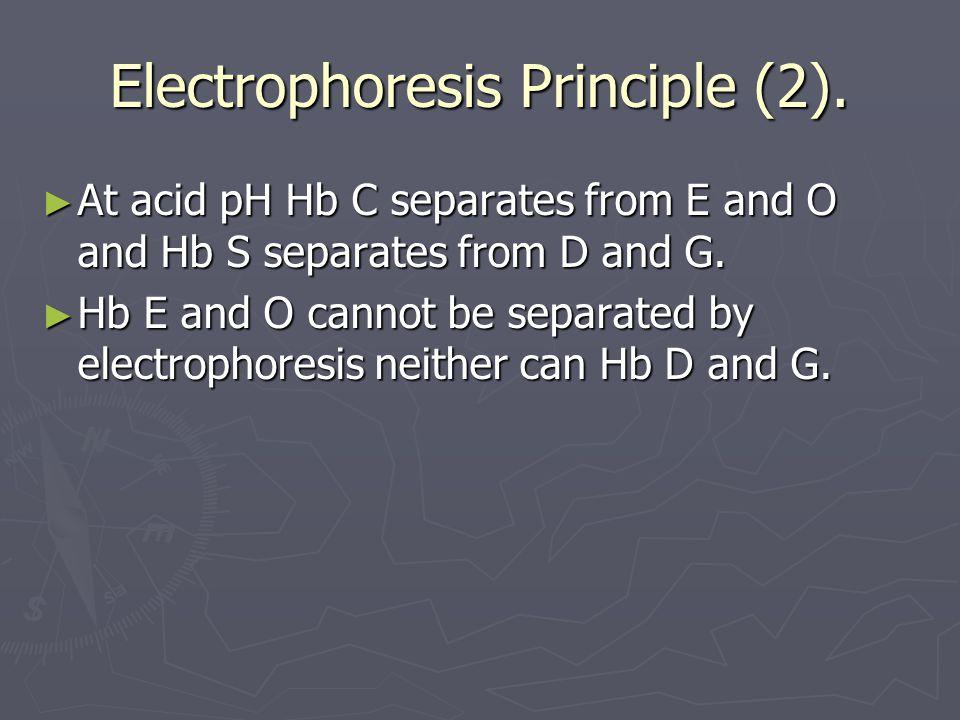 Electrophoresis Principle (2).