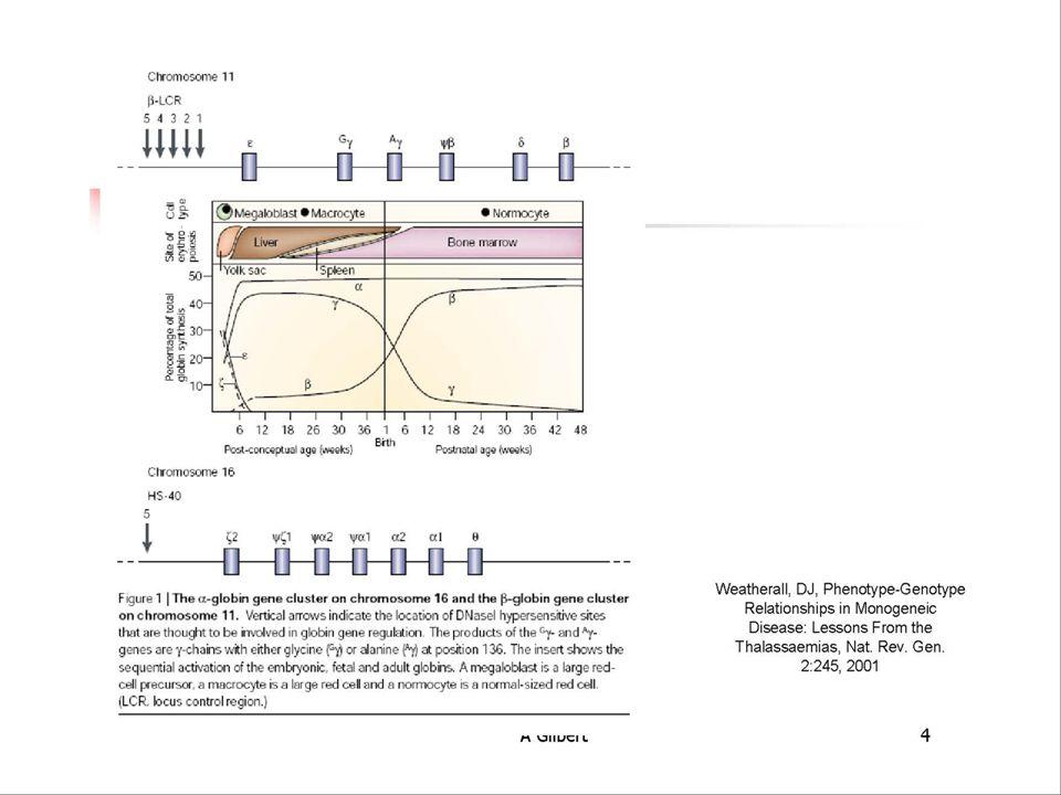 Beta Thalassemia Classification.