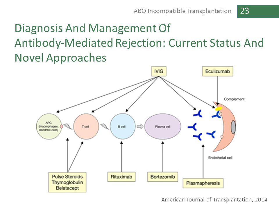 23 ABO Incompatible Transplantation Diagnosis And Management Of Antibody‐Mediated Rejection: Current Status And Novel Approaches American Journal of T