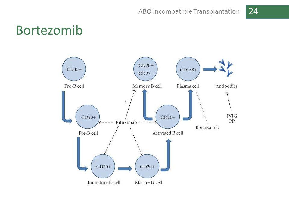 24 ABO Incompatible Transplantation Bortezomib