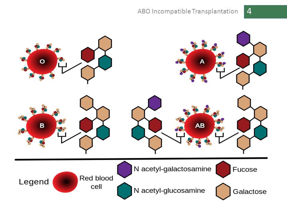4 ABO Incompatible Transplantation