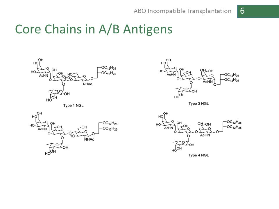 6 ABO Incompatible Transplantation Core Chains in A/B Antigens