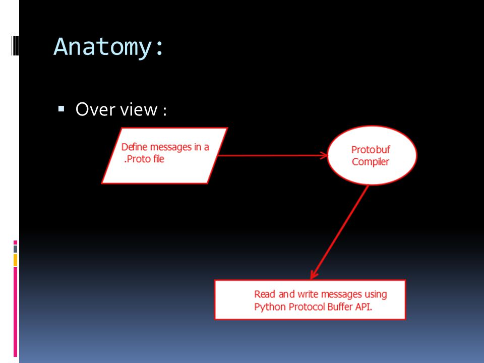 Anatomy:  Over view :