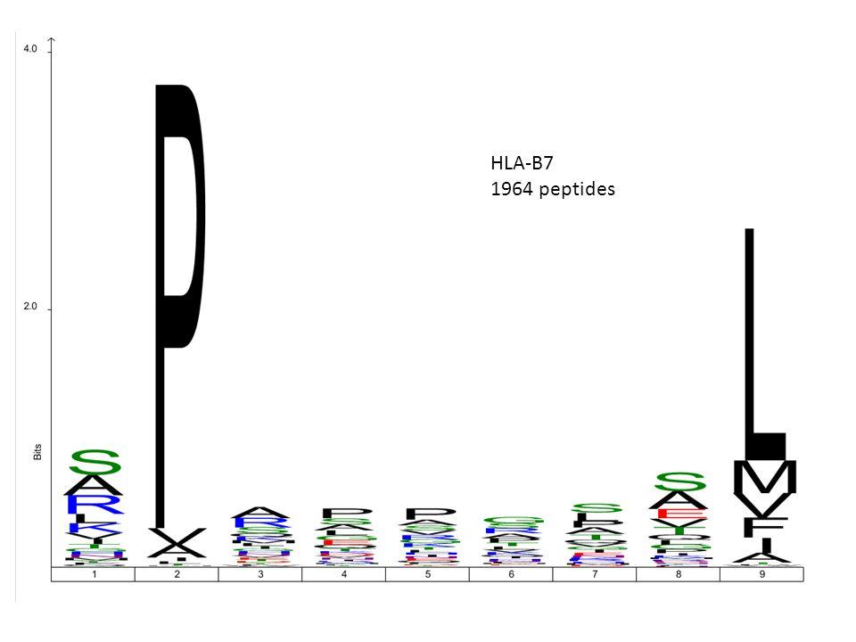 HLA-B7 1964 peptides
