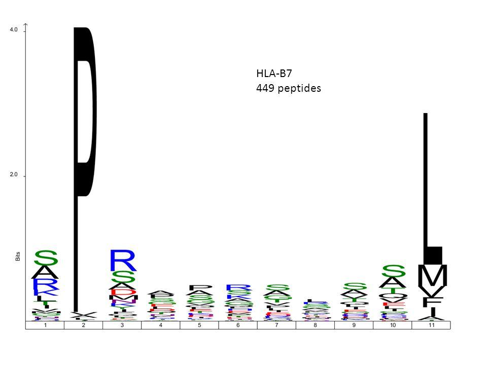 HLA-B7 449 peptides