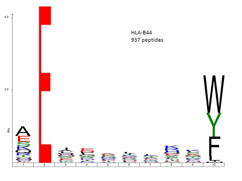 HLA-B44 937 peptides