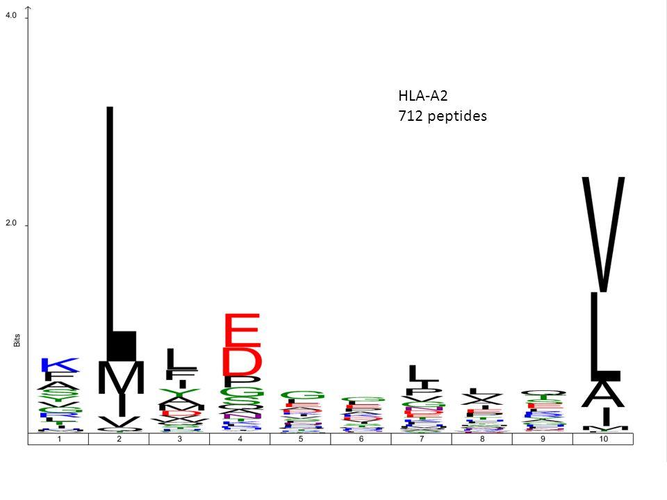HLA-A2 712 peptides