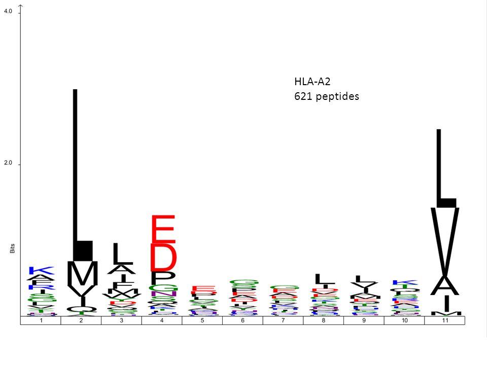 HLA-A2 621 peptides