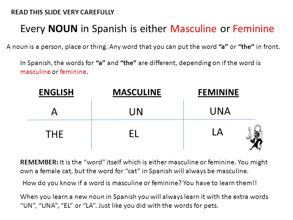 Every NOUN in Spanish is either Masculine or Feminine A noun is a person, place or thing.