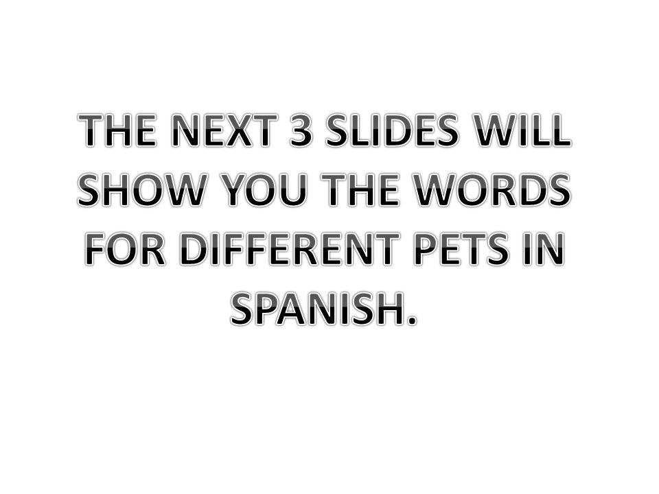 Un gato Un pez Un conejo Un perro