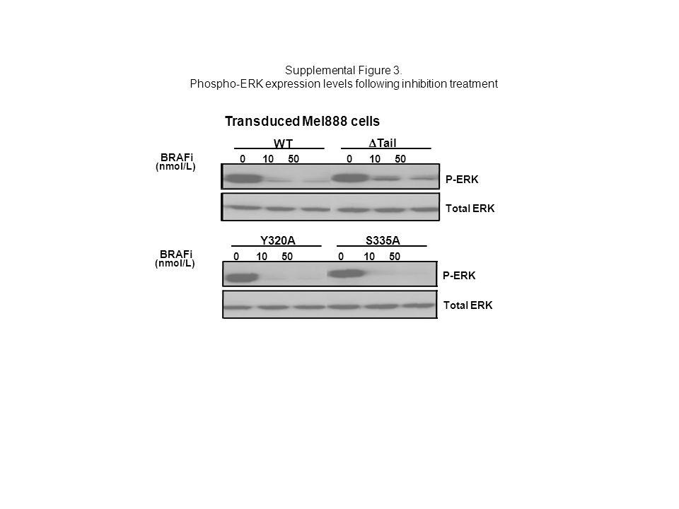 Total ERK P-ERK WT BRAFi  Tail 0 10 50 (nmol/L) Y320A Supplemental Figure 3. Phospho-ERK expression levels following inhibition treatment Transduced