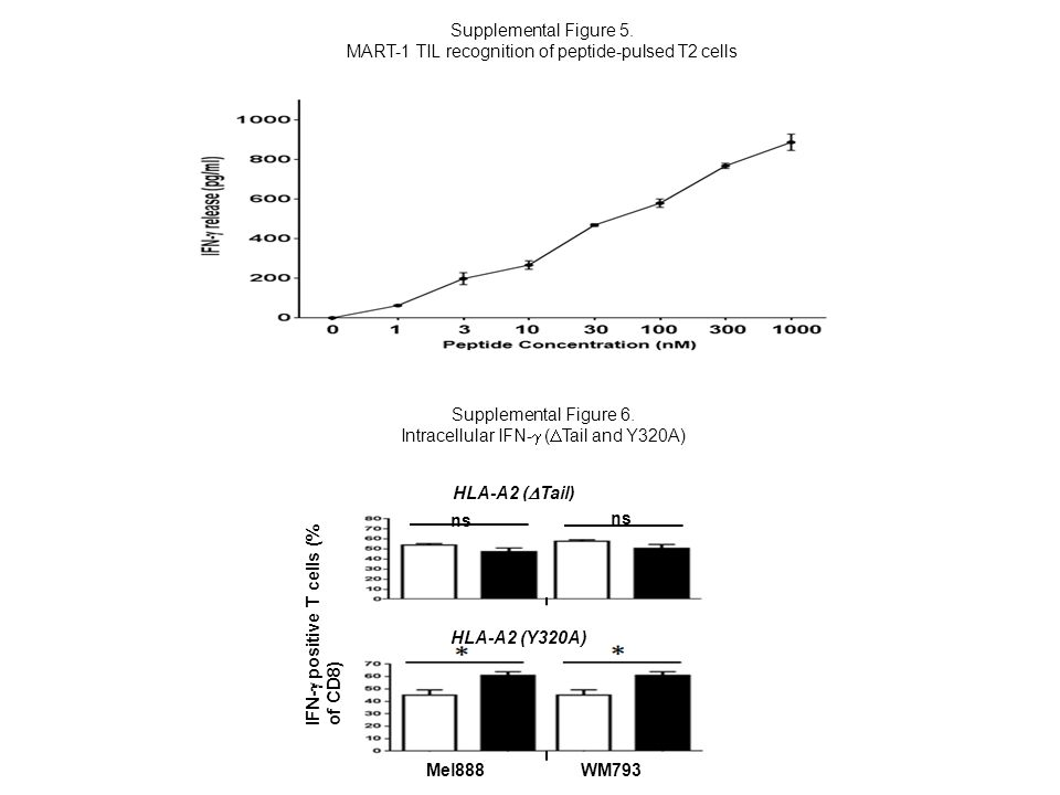 Supplemental Figure 6. Intracellular IFN-  (  Tail and Y320A) IFN-  positive T cells (% of CD8) HLA-A2 (  Tail) HLA-A2 (Y320A) Mel888 WM793 Suppl