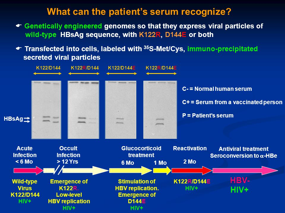 HBsAg C- C+ P K122/D144K122R/D144K122/D144EK122R/D144E C- = Normal human serum C+ = Serum from a vaccinated person P = Patient's serum What can the pa