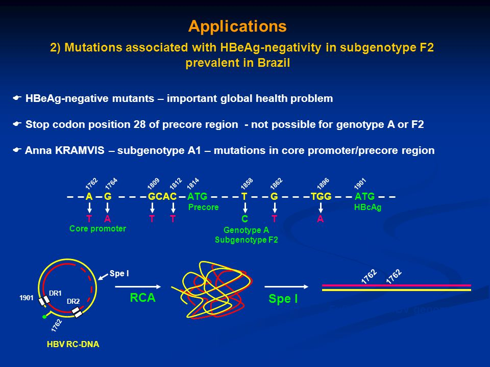 Applications 2) Mutations associated with HBeAg-negativity in subgenotype F2 prevalent in Brazil  HBeAg-negative mutants – important global health pr