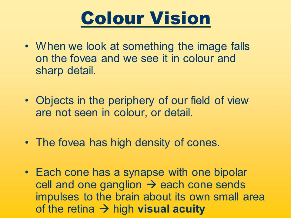 Refers to the ability of the eye to alter its focus so that clear images of both close and distant objects can be formed on the retina –The lens shape can be altered by suspensory ligaments and the ciliary muscles.