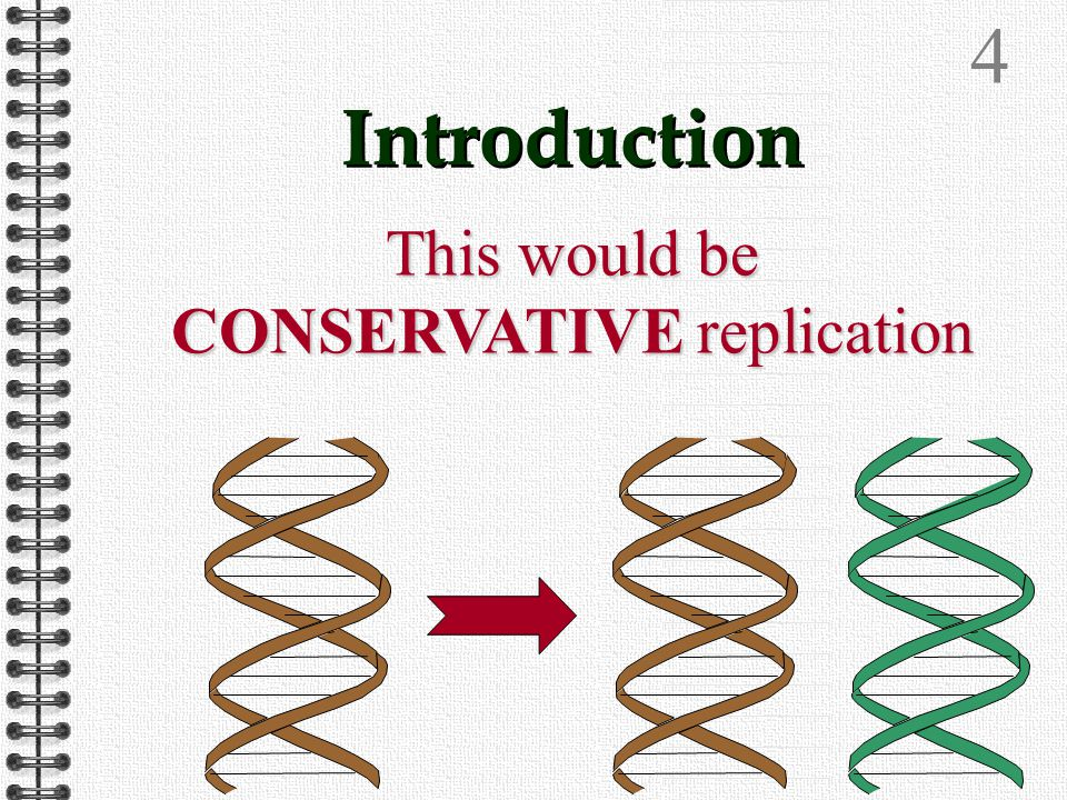 3 Introduction Theoretically there are two possible ways in which DNA could replicate