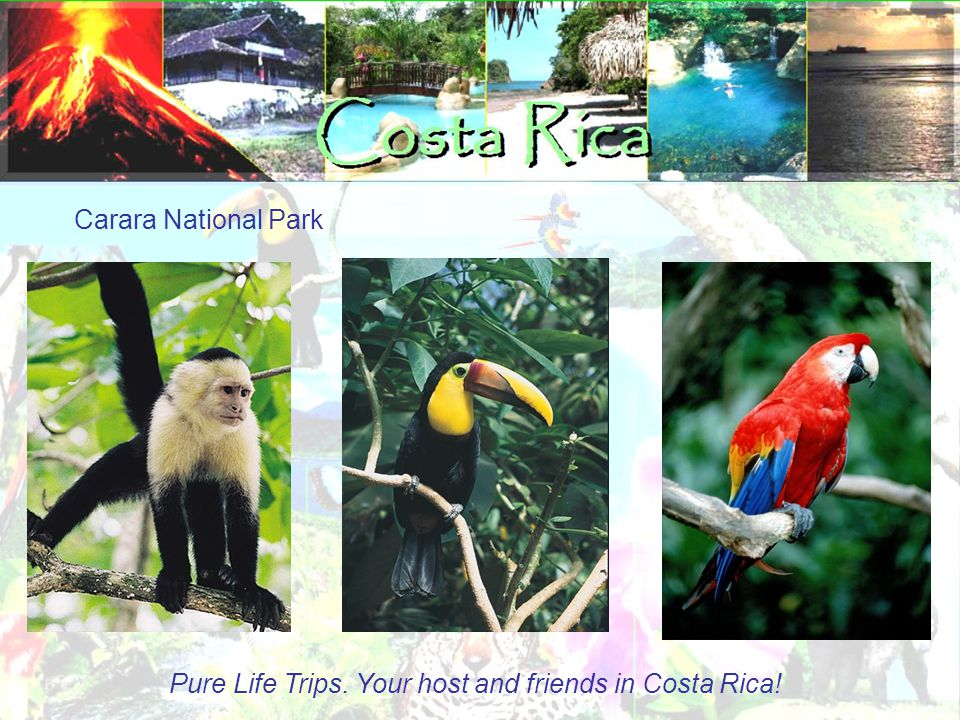 Carara National Park Pure Life Trips. Your host and friends in Costa Rica!