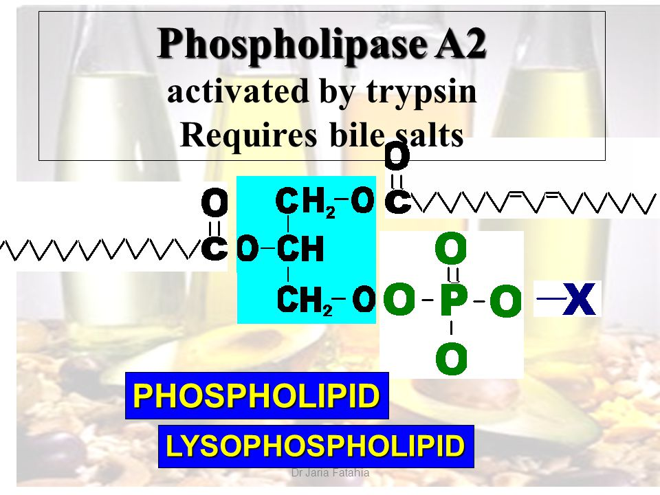 Dr Jaria Fatahia Phospholipase A2 activated by trypsin Requires bile salts PHOSPHOLIPID LYSOPHOSPHOLIPID