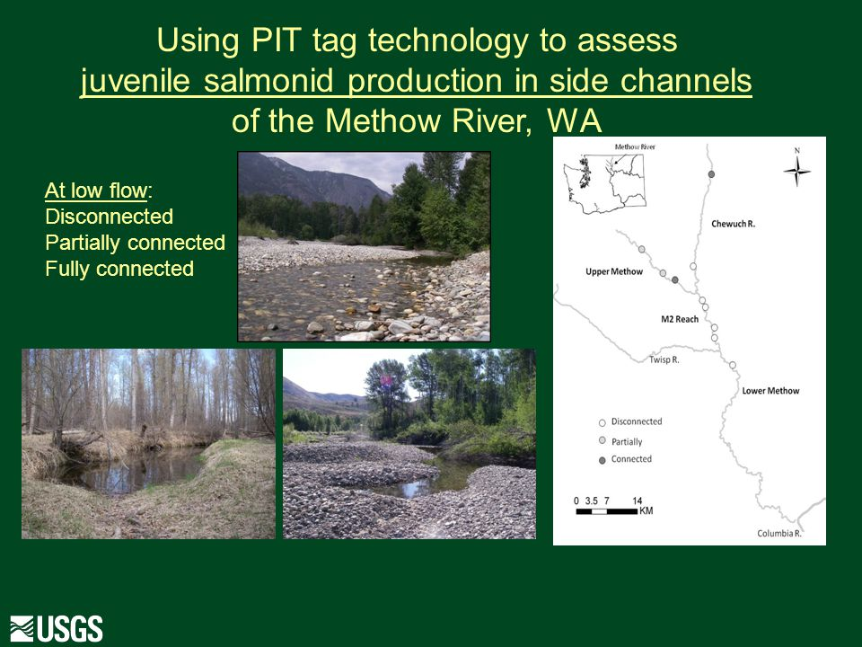 Using PIT tag technology to assess juvenile salmonid production in side channels of the Methow River, WA At low flow: Disconnected Partially connected Fully connected