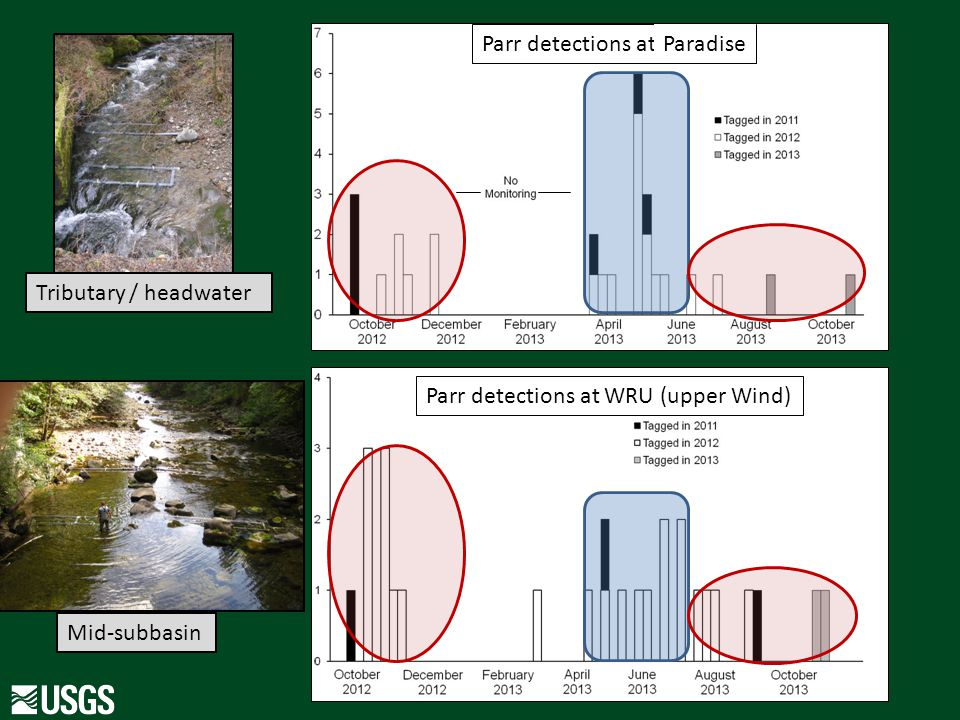 Parr detections at WRU (upper Wind) Parr detections at PAR Tributary / headwater Mid-subbasin Paradise