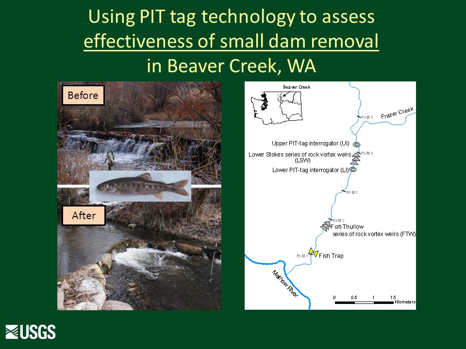 Using PIT tag technology to assess effectiveness of small dam removal in Beaver Creek, WA Before After