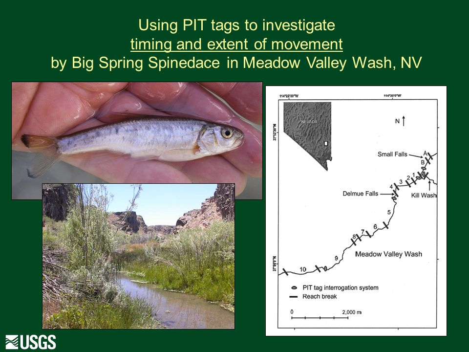 Using PIT tags to investigate timing and extent of movement by Big Spring Spinedace in Meadow Valley Wash, NV