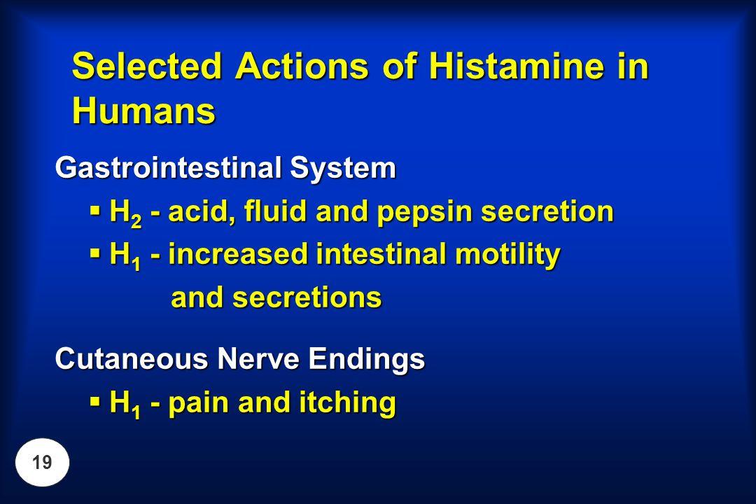 19 Gastrointestinal System  H 2 - acid, fluid and pepsin secretion  H 1 - increased intestinal motility and secretions and secretions Cutaneous Nerv