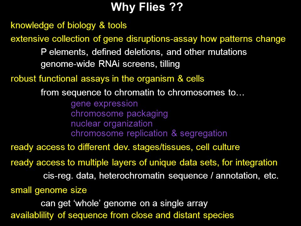 knowledge of biology & tools extensive collection of gene disruptions-assay how patterns change P elements, defined deletions, and other mutations gen