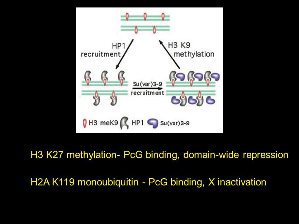 H2A K119 monoubiquitin - PcG binding, X inactivation H3 K27 methylation- PcG binding, domain-wide repression