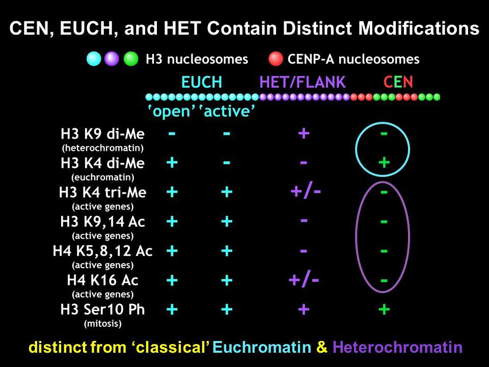 CEN, EUCH, and HET Contain Distinct Modifications distinct from 'classical' Euchromatin & Heterochromatin