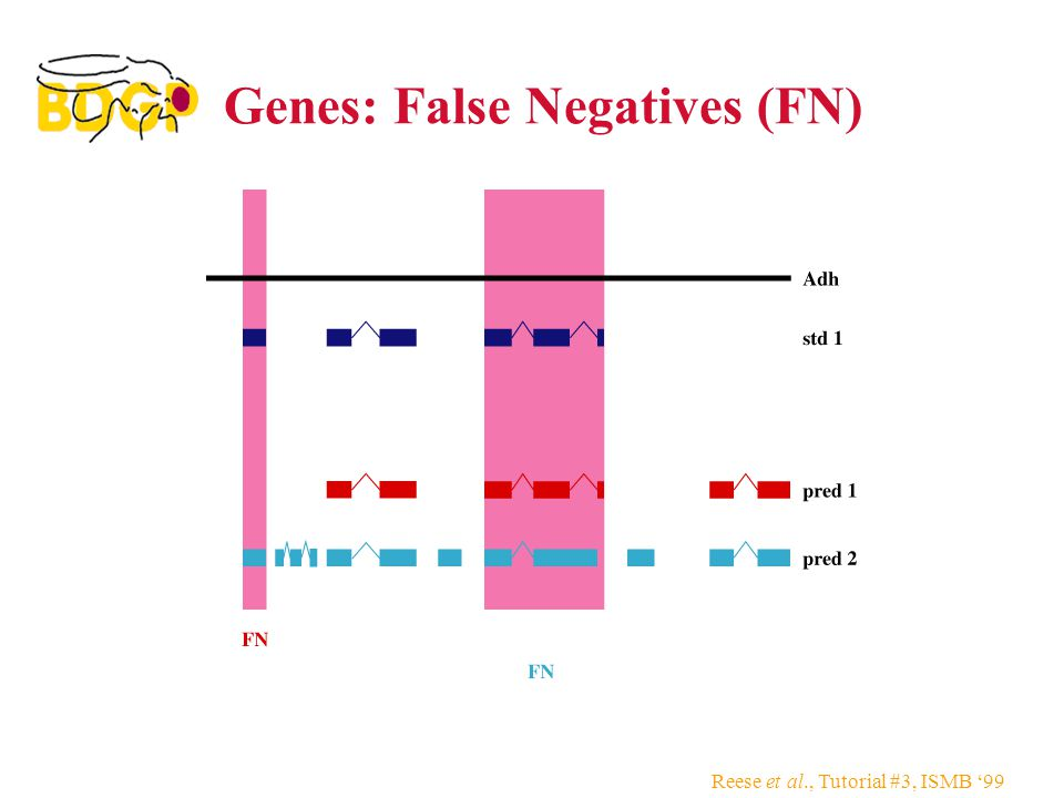 Reese et al., Tutorial #3, ISMB '99 Genes: False Negatives (FN)
