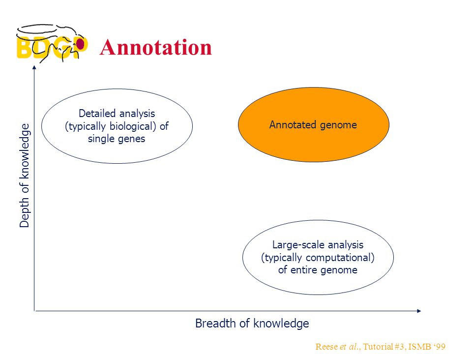 Reese et al., Tutorial #3, ISMB '99 Annotated genome Annotation Depth of knowledge Breadth of knowledge Detailed analysis (typically biological) of single genes Large-scale analysis (typically computational) of entire genome