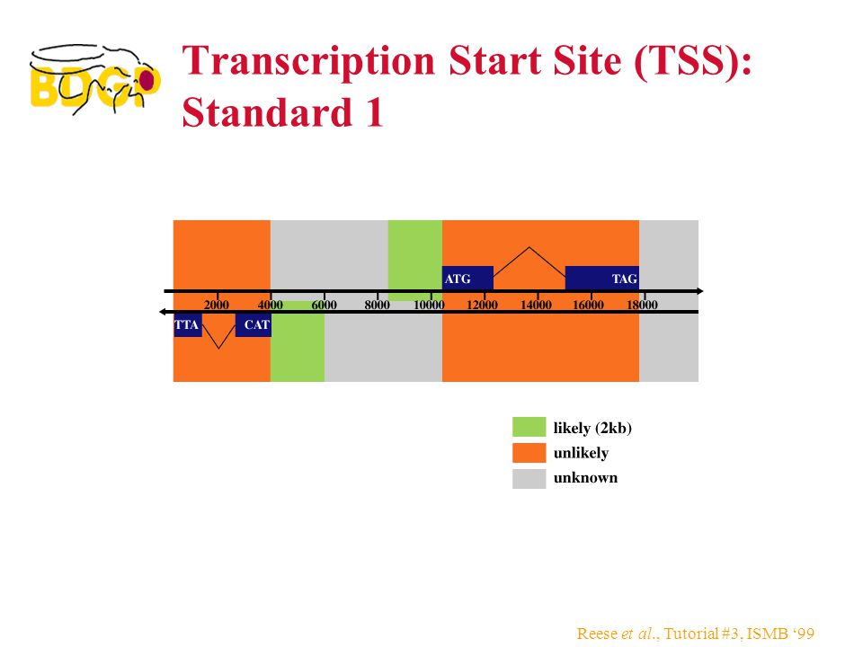 Reese et al., Tutorial #3, ISMB '99 Transcription Start Site (TSS): Standard 1