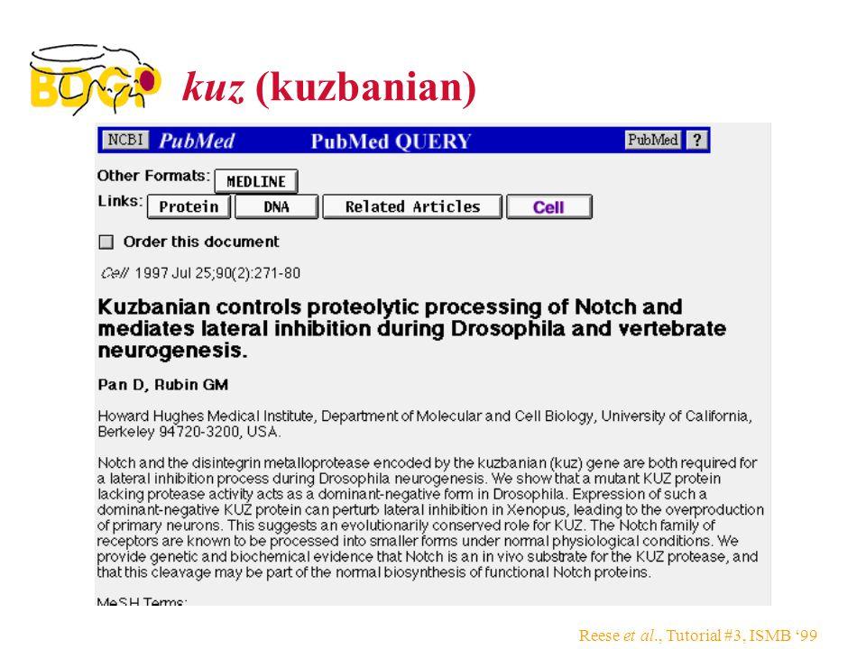 Reese et al., Tutorial #3, ISMB '99 kuz (kuzbanian)