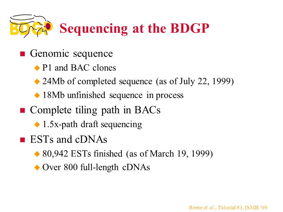 Reese et al., Tutorial #3, ISMB '99 Sequencing at the BDGP Genomic sequence  P1 and BAC clones  24Mb of completed sequence (as of July 22, 1999)  18Mb unfinished sequence in process Complete tiling path in BACs  1.5x-path draft sequencing ESTs and cDNAs  80,942 ESTs finished (as of March 19, 1999)  Over 800 full-length cDNAs