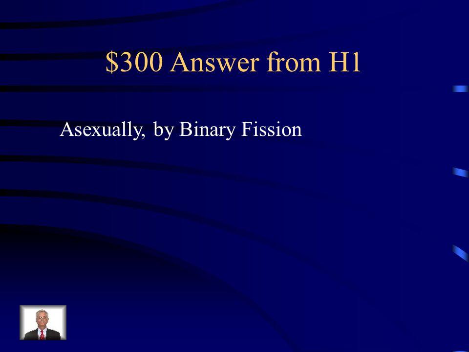 $300 Answer from H3 Nitrogen bases: Adenine, Thymine, Cytosine, Guanine